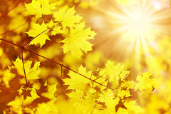 Old autumn leaf and sun ray Royalty Free Stock Photography