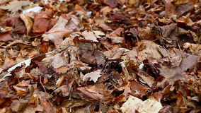 Old autumn leaves Stock Photos