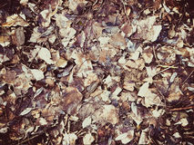 Old autumn leaves. Mosaic of old fallen autunm leaves stock photos