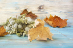 Old autumn maple leaf, bouquet of Lagurus ovatus and Briza Poaceae on the blue wooden table. Vintage style background. Herbarium. Stock Photos