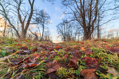 In old, autumn park. Stock Photo