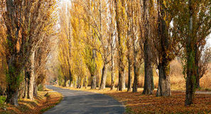 Old autumn road at Lake Balaton Stock Images