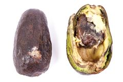 Old avocado with mold on white background, unhealthy and disgusting food. Old wrinkled avocado with mold on white background, unhealthy and disgusting food stock images