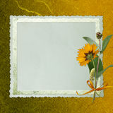 Old background with frame and flowers Stock Photos