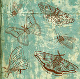 Old background with moth, vintage Royalty Free Stock Images