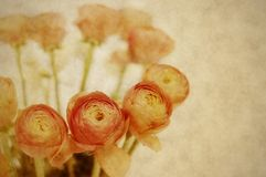 Old background whis beautiful orange flowers Stock Images