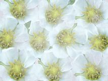Old background with white flowers. Royalty Free Stock Photos