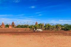 Old Bagan in Bagan-Nyaung U, Myanmar Royalty Free Stock Image