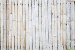 Old bamboo fence background Royalty Free Stock Photo