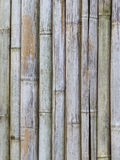 Old bamboo fence background Stock Images