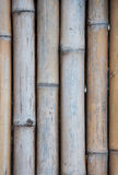 Old bamboo fence Stock Image