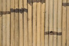 Old bamboo fence. Old dried bamboo fence texture Royalty Free Stock Photography
