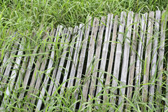 Old bamboo fence on grass Royalty Free Stock Image
