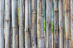Old bamboo fence pattern texture Royalty Free Stock Photo