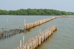Old bamboo fence protect sandbank Stock Image