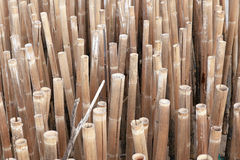 Old bamboo Royalty Free Stock Photo