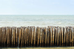 Old bamboo in sea Royalty Free Stock Image