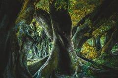 Old banyan tree. Stock Photo