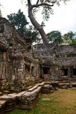 Old banyan tree towers over the ancient ruin of Ta Phrom temple, Angkor Wat, Cambodia Stock Images
