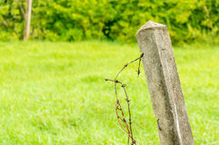 Old barb wire with concrete pillar Stock Photo