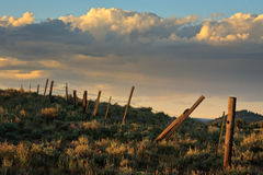 Old Barb Wire Fence stock image