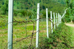 Old barb wire fence with grass Royalty Free Stock Photos