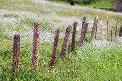 Old barb wire and wooden fence with damage Stock Photography