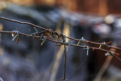 Old barbed wire closeup Stock Images