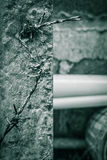 Old barbed wire and concrete poles Royalty Free Stock Image