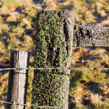 Old barbed wire on weathered fence post with lichen Royalty Free Stock Image