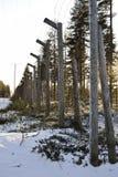 Old barbwire fence near joensuu Stock Photo