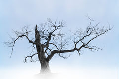 Old bare tree Stock Images