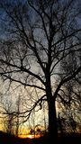 Old bare tree at sunset Royalty Free Stock Photography