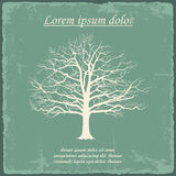 Old bare tree on vintage paper. Vector Stock Photo