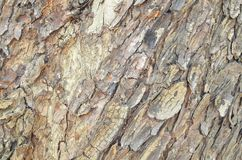 Old bark background Royalty Free Stock Photo