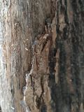 Old bark background royalty free stock photography