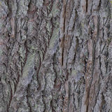 Old Bark Seamless Texture Royalty Free Stock Images