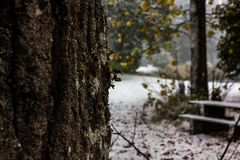 Old bark in snowy park. Close up of mossy pine tree bark with a snow covered park in the background Stock Images