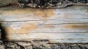 Old bark tree dropped out. And see the wood Stock Photography