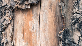 Old bark tree dropped out. And see the wood Stock Image