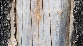 Old bark tree dropped out Stock Images