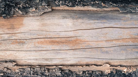 Old bark tree dropped out Royalty Free Stock Photo