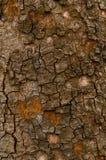 Old bark of tree texture Royalty Free Stock Photos