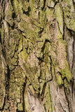 Old Bark Tree texture background, Brown and green Tree trunk Royalty Free Stock Photos