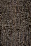 The old bark of tree texture. Old bark texture in thailand Royalty Free Stock Photo