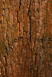 Old bark wood cracked texture with lichen. Old bark wood cracked texture with orange lichen stock photo