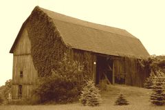 Old Barn With Vines Stock Photo Image 45024787
