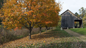 Old barn in autumn. Old barn behind autumn trees in the late afternoon Royalty Free Stock Photo