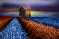 Old barn  on colourful lavender field Stock Image