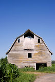 Old barn in the corn field. Old abandoned barn in the corn field with blue sky Stock Images